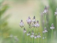 春っぽい - 瞳の記憶