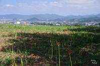 御所市九品寺 - ぶらり記録 2:奈良・大阪・・・