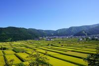 野沢温泉村稲刈りを待つ田んぼ - 野沢温泉とその周辺いろいろ2