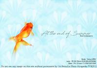 きらきらひらひらふらふら。sony α7RIV + SEL2470GM金魚の実写 #α7R4 #a7R4 #東京スカイツリータウン#すみだ水族館 - 東京女子フォトレッスンサロン『ラ・フォト自由が丘』〜恋フォトからはじめるさいとうおりのテーブルフォトと写真とカメラ〜