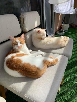 ベランダリゾートカップル - ぶつぶつ独り言2(うちの猫ら2018)