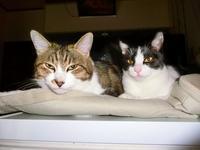 我が家の保護猫2019-09-21更新 - 夕陽に魅せられて・・・
