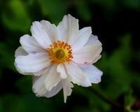 軽井沢レイクガーデンで秋らしい花などを - 星の小父さまフォトつづり