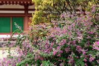薬師寺萩の花 - ちょっとそこまで