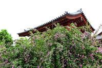 薬師寺玄奘三蔵院伽藍の萩の花 - ちょっとそこまで