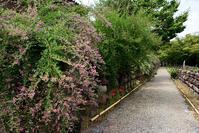 元興寺萩の花 - ちょっとそこまで