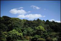 小石川植物園 -12 - Camellia-shige Gallery 2