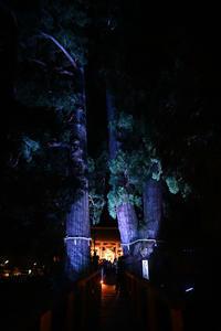 静寂の中笛の音が流れゆく神秘の世界大杉に宿る山中温泉栢野大杉 - 酎ハイとわたし