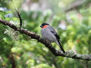 コーヒー党の野鳥と自然パート3