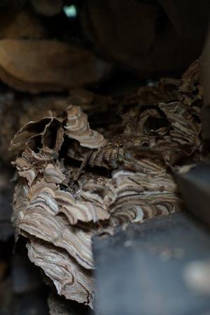 スズメバチの巣 - Studio Okamoto の 徒然日記