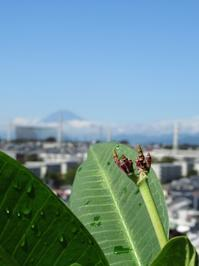 本日の花芽 と 青空〜♪ - Aloha Kayo-s Style