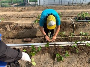 真紅の美鈴 苗定植 地域貢献型農福連携請負作業 - ジョブファーム活動ブログ