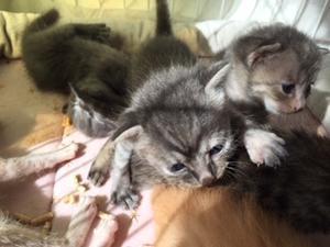 9月21日(土)・22日(日)保護猫カフェ開催します。 - 青梅にゃんにゃん・サークル「WISH」