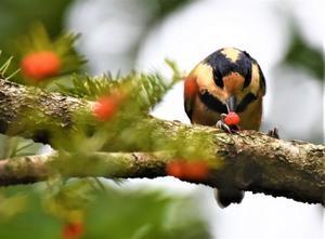北の森から野鳥とエゾリス便り -
