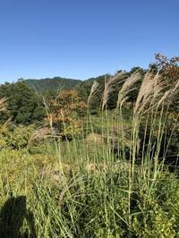 すっかり秋めいて来ました - g's style day by day ー京都嵐山から、季節を楽しむ日々をお届けしますー