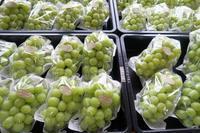 シャインマスカットの収穫開始 - ~葡萄と田舎時間~ 西田葡萄園のブログ