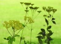 「美人」という花言葉を贈られて・・・。 - monn-sann