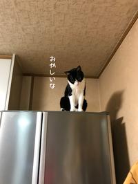 はちわれハッちゃん登頂後 - gin~tetsu~nosuke