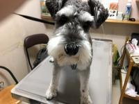 迷い犬のお知らせ - アイマグブログ― らいおん動物病院 らいおん先生