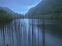 2019,fly fishing trip7 ヤマトイワナの森 - 山と渓のホールで渓魚と奏ならん