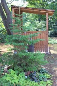 かなり早いクリスマスツリーの話&日陰植物 - ペコリの庭 *