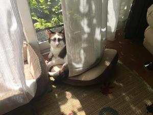 先週のこと - 「両手のない猫」チビタと愉快な仲間たち