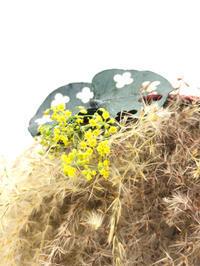 ドライのススキで花あそび - **おやつのお花*   きれい 可愛い いとおしいをデザインしましょう♪