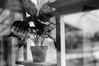 ガラスの向こう側 - floating mind