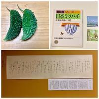 ニホンミツバチ・ゴーヤ・雨ニモマケズ - きいろいポケット