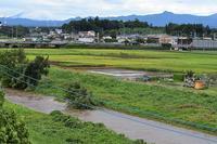 小畔川便り(台風・雷雨・伐採:2019/9/9-12) - 小畔川日記
