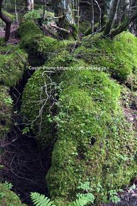 御泉水自然園にて・・・その2 - Coshiのお気楽日常写真