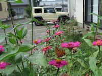自宅にウラギンヒョウモン - 秩父の蝶