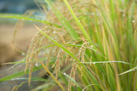収穫と台風 - ナナイロノート