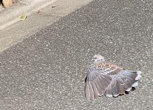 「鳩は油断が多いよね」 - もるとゆらじお