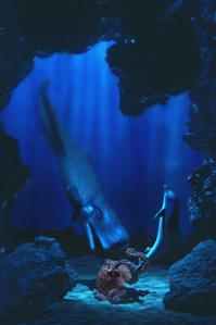 イルカを助けるクジラ -   木村 弘好の「こんな感じかな~」□□□ □□□□ □□ □ブログ□□□