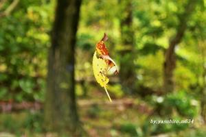 「くるくる まわり」 秋 感じる - 俺の心旅
