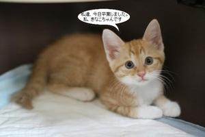 仔猫さん卒業 - 保護猫さんのご縁探し