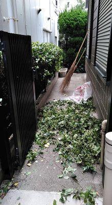 久し振りに庭仕事 - うまこの天袋