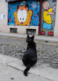 旅猫・ポルトの黒猫 - 写真家・椎名トモミの旅カメラ