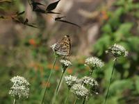 『大智寺周辺の花達~❁❂』 - 自然風の自然風だより