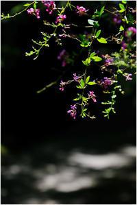 萩の花 - HIGEMASA's Moody Photo