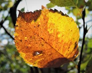 ほんの少し秋らしくなってきました。 - ぶりんの部屋