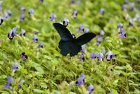 蝶々 - 今日の空+α2