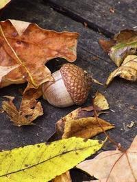 秋を知らせる野花達 New England Aster - NYからこんにちは
