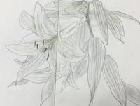 百合 - 『一日一畫』 日本画家池上紘子