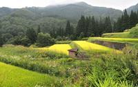 棚田 3鳥取県 - ty4834 四季の写真Ⅱ
