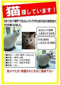 迷子のこまちゃん情報提供のお願い(2019.9.23) - きよせ猫耳の会(旧 飼い主のいない猫を考える会)