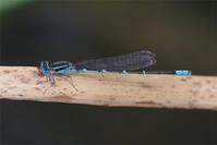 池の復活 - 蝶と蜻蛉の撮影日記