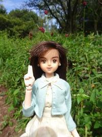 ワレモコウの花が咲きました - mitsukiのお気楽大作戦