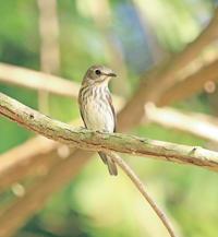 エゾちゃん - ゆるゆる野鳥観察日記